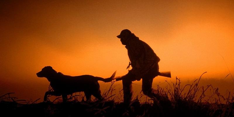 ВВоронежской области площадь охотоугодий возросла на1 млн гектар