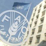 Все флаги в гости к нам: Очередная конференция Продовольственной и сельскохозяйственной организации ООН пройдет в Воронеже