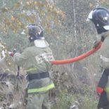 Заслон для огня: Почти 200 спасателей ликвидировали лесной пожар в Воронеже