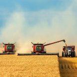Сдюжили: В Воронежской области установлен рекорд по сбору зерновых