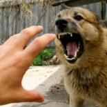 И лает, и кусается: В Воронежской области стало больше бешеных животных