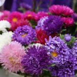 С цветами – на выход: Перед Днем знаний воронежские полицейские вышли «поохотиться» на продавцов букетов