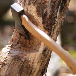 Все вокруг колхозное…: Житель Воронежской области срубил на дрова дубы на 150 тыс. руб.