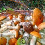 Скоро и подснежники пойдут?!: Жители Воронежа похвастались урожаем январских грибов