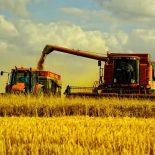 Негусто, но все же: Воронежские аграрии намолотили первый миллион тонн зерна