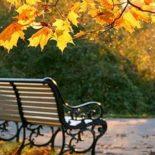 Настоящая осень: Синоптики рассказали, к какой погоде готовиться воронежцам на рабочей неделе