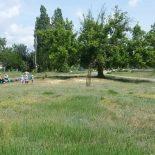 Лишь бы не единственный: В воронежском микрорайоне Подгорное появится первый парк (СХЕМА)