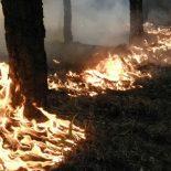 Опять подстилка: В Железнодорожном районе произошел ландшафтный пожар