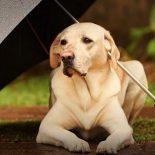 Тепло ли тебе, девица?: Рабочая неделя принесет воронежцам похолодание и дожди