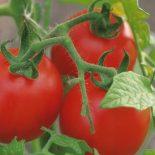 Грядки с размахом: В Воронежской области запустят крупный тепличный комплекс по выращиванию овощей