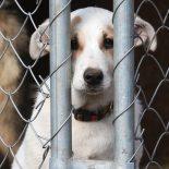 Под гордое рычание: Воронежцы вновь раскритиковали проект строительства приюта для безнадзорных животных