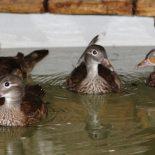 Крылатая «реинкарнация»: В Воронежском зоопарке заново откроется зал птиц