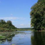 Оздоровили: В Воронежской области произвели расчистку рек Девица и Битюг