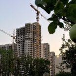 Первый пошел: Строительную компанию «Выбор» лишили одного участка яблоневых садов в Воронеже
