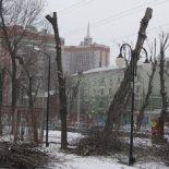 Не уберегли: В воронежском сквере «Комсомольский» вырубят 52 засохших ясеня