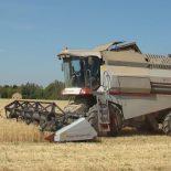 Стихийная задержка: В Воронежской области темпы уборки зерновых упали в 12 раз от прошлогодних