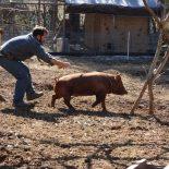 «Бомба замедленного действия»: Воронежские чиновники и бизнесмены обвинили в болезнях животных рядовых крестьян